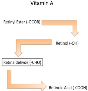 conversion of retinol to retinoic acid